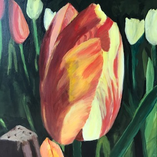Sunset Tulip